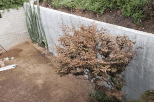 Mulholland Backyard Renovation (3) (1)