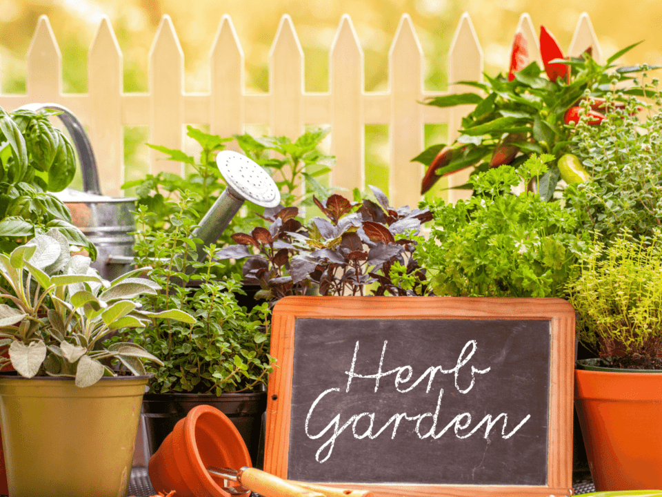 8 Vegetables and Herbs for Beginning Gardeners (3)