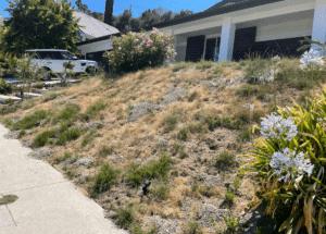 Tarzana Backyard Renovation (39)